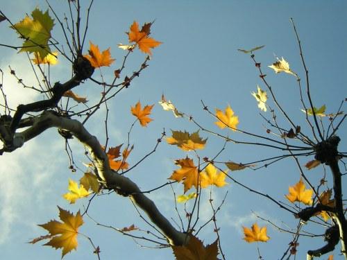 Oktober Sonne